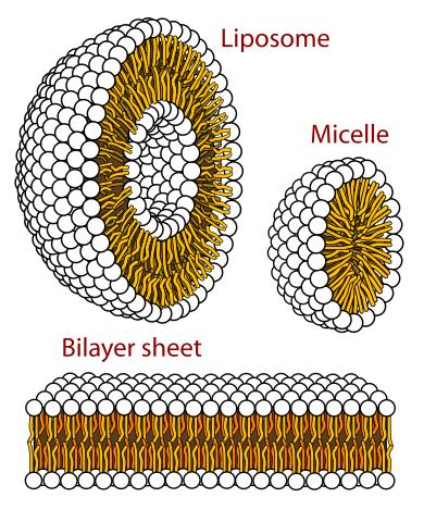 Protobiontes: origem e propriedades 2