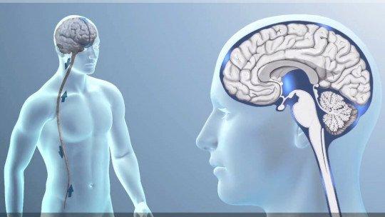 Líquido cerebrospinal: composição, funções e distúrbios 1