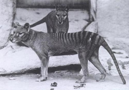 71 animais extintos em todo o mundo (e causas) 11