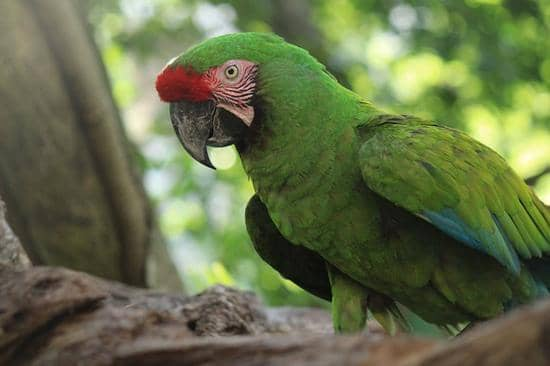 10 animais da região costeira do Equador 7