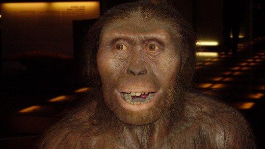 Lucy, o Australopithecus: este foi o fóssil que mudou tudo 1