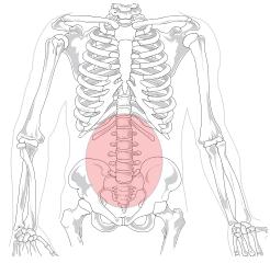 Lombalgia: sintomas, causas, tratamento 1