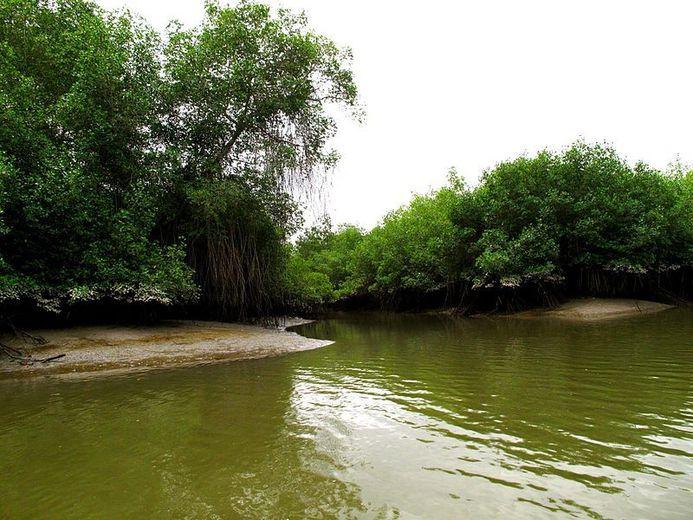 Os 4 biomas do Equador e suas características 3