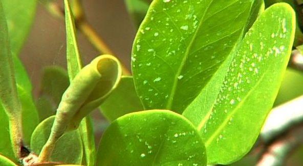 Excreção de plantas: tipos de substâncias, processos e estruturas 3