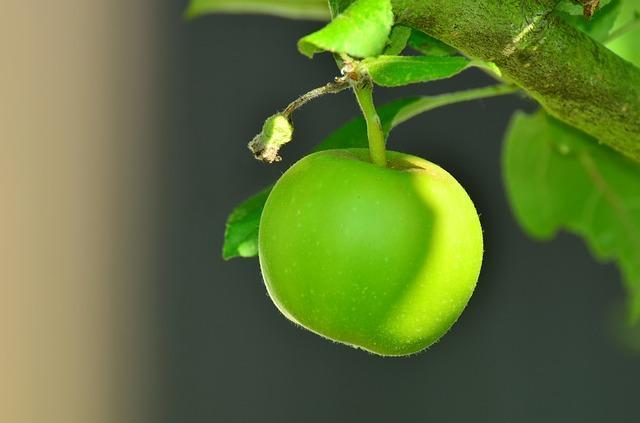 Os 30 frutos mais comuns da serra equatoriana 5