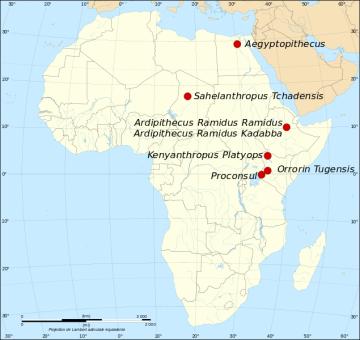 De onde os Hominídeos se originaram? 1