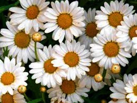 Campo Semântico das Flores: Destaques 3
