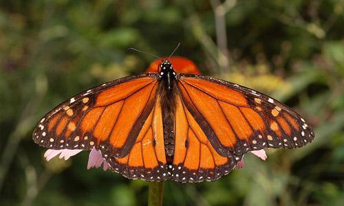Invertebrados: características, reprodução, respiração 1