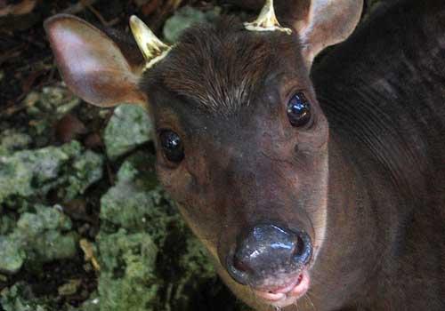 20 animais em extinção na Venezuela 15