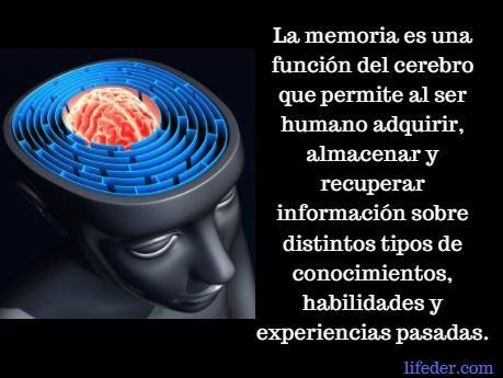 O que é a memória humana? (Psicologia) 2