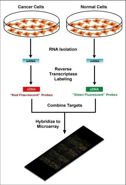 Microarrays de DNA: procedimento e aplicações 2