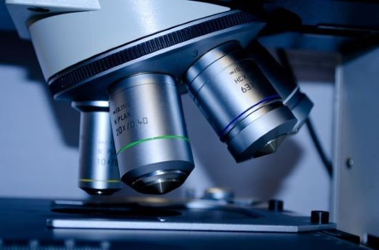 Anatomia microscópica: história, que estudos, métodos 2