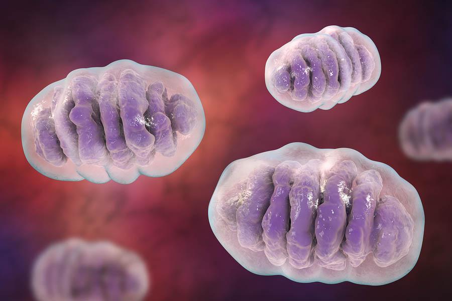 Mitocôndrias: partes, funções e doenças associadas 1
