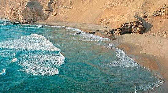 Os 4 moluscos marinhos mais comuns do Peru 1