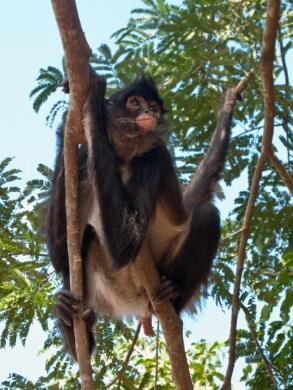 50 animais em perigo de extinção no México [com imagens] 29