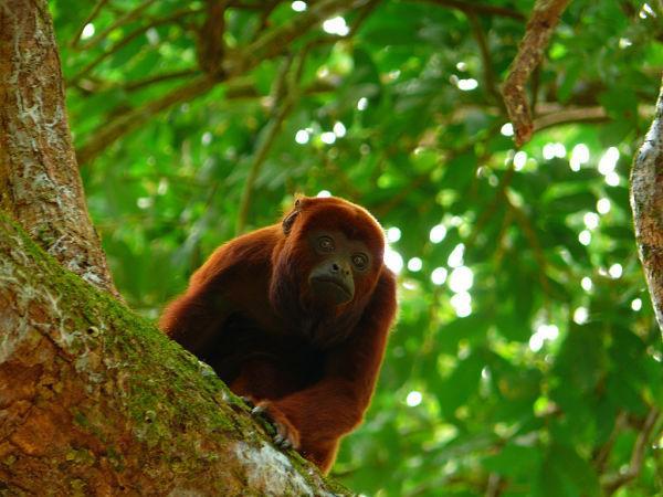 50 animais em perigo de extinção no México [com imagens] 4