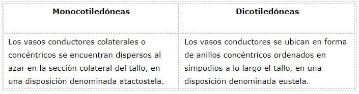Diferenças entre monocotiledôneas e dicotiledôneas 16