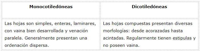 Diferenças entre monocotiledôneas e dicotiledôneas 8
