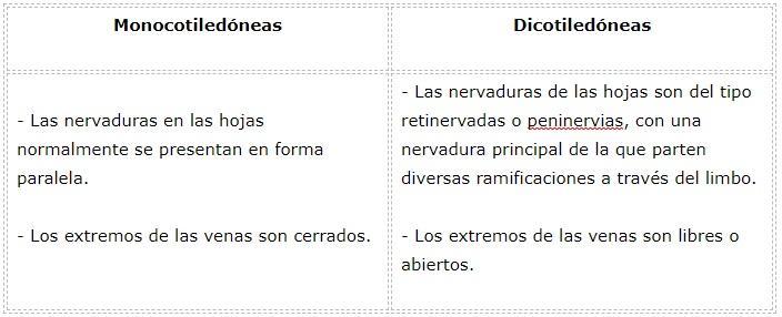 Diferenças entre monocotiledôneas e dicotiledôneas 11