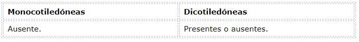 Diferenças entre monocotiledôneas e dicotiledôneas 23