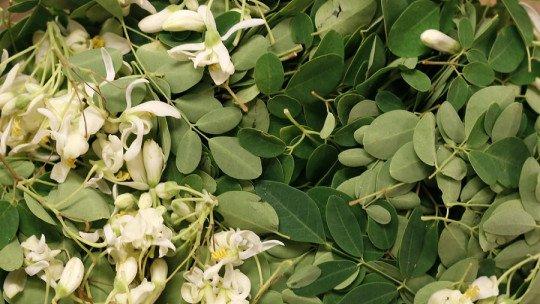 Moringa: características, benefícios e propriedades desta planta 9