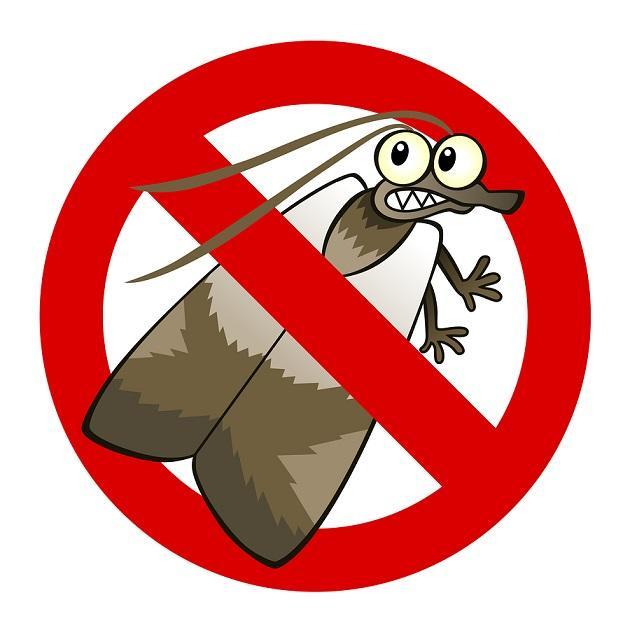Motefobia (fobia da mariposa): sintomas e causas 1