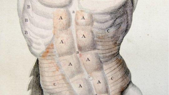 Músculos respiratórios: tipos, características e funções ao respirar 1