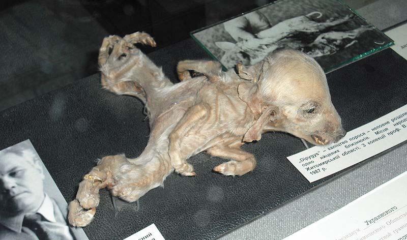 Mutações de Chernobyl em humanos e animais 1