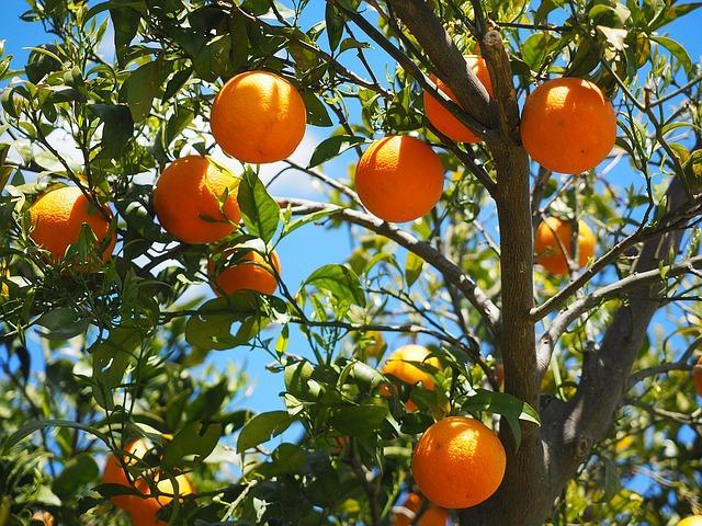 Os 30 frutos mais comuns da serra equatoriana 4