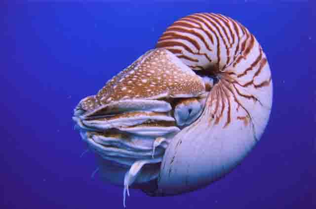 Os 27 animais marinheiros invertebrados mais incríveis 26
