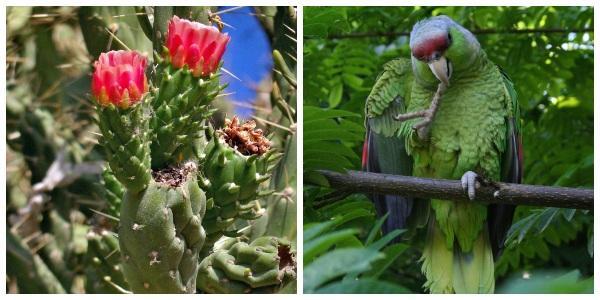Flora e fauna de Nayarit: espécies mais representativas 1