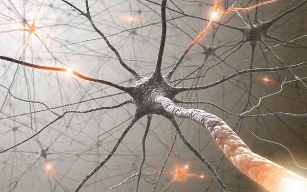 Sinaptogênese: desenvolvimento, maturação e doenças 2