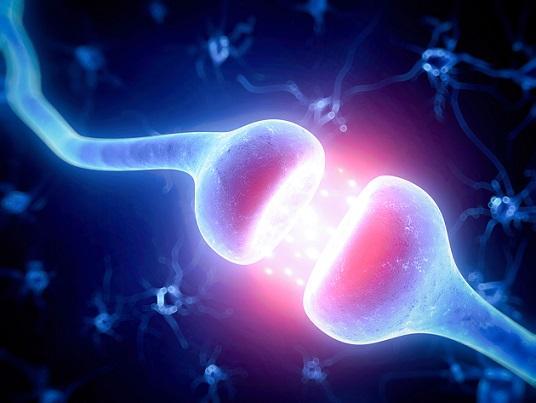 Sinaptogênese: desenvolvimento, maturação e doenças 12