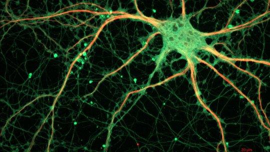 Neurotransmissores e neuromoduladores: como eles funcionam? 1