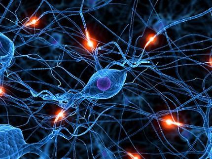 Neurônios dopaminérgicos: características, funções e vias 1