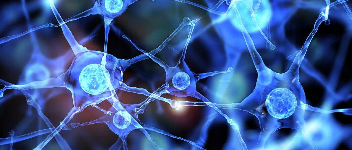 Diferenças entre neuropsicologia e neurologia 2