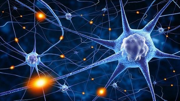 Os 35 tipos de neurônios, funções e características 13