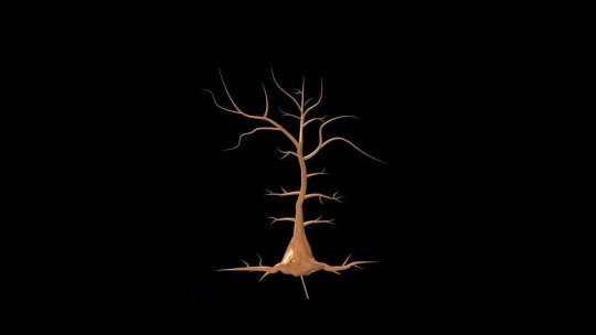 Neurônios piramidais: funções e localização no cérebro 1