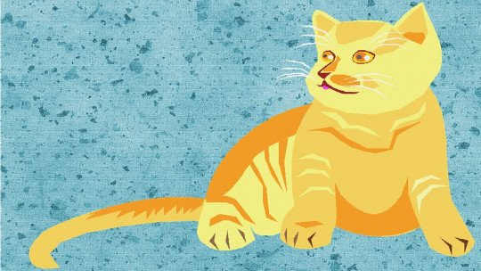 Crianças e animais de estimação em casa: 7 pontos que você deve valorizar 1