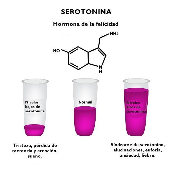Serotonina: função, produção, estrutura 5