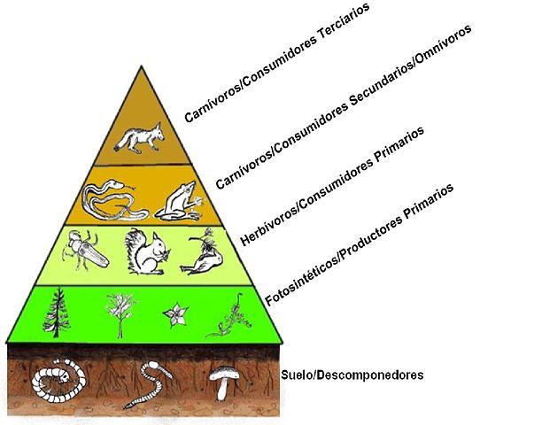 Níveis tróficos e os organismos que o compõem (exemplos) 1