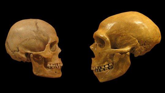 Nossa espécie é mais inteligente que os neandertais? 21