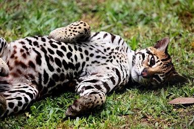 50 animais em perigo de extinção no México [com imagens] 9