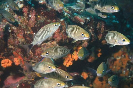 20 Animais da costa equatoriana e suas características 2