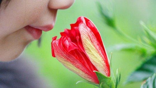 O inconsciente e os cheiros 1