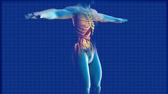Os 25 principais órgãos do corpo humano 1