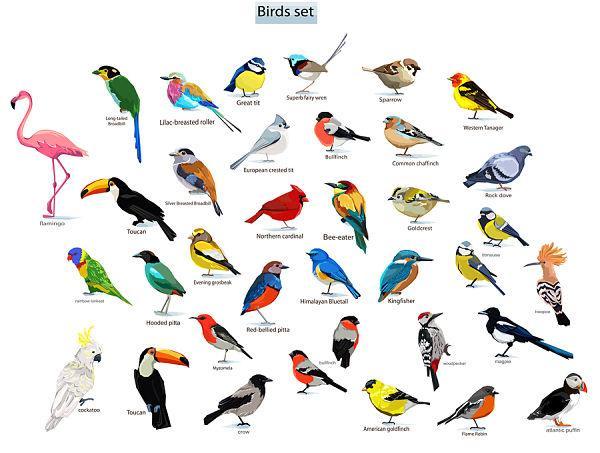 O que o estudo de ornitologia? 1