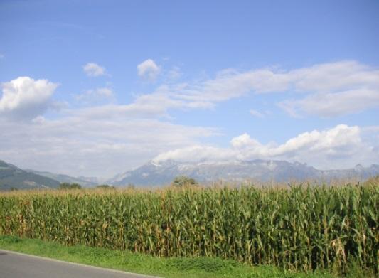 Qual país é o principal produtor de grãos do mundo? 1