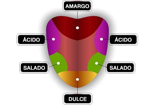 Senso de gosto: tipos de sabores, receptores e percepção 7