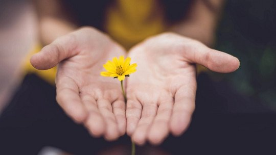Qual é a utilidade de pedir perdão? Seus 6 benefícios 1